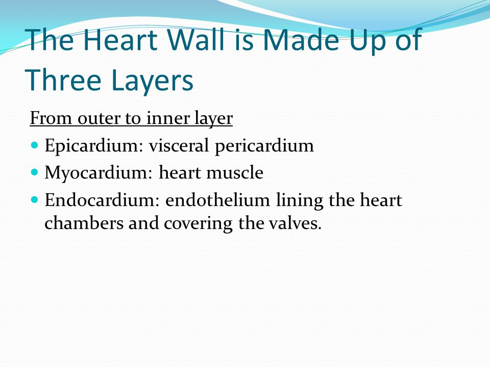 The Heart Wall is Made Up of Three Layers