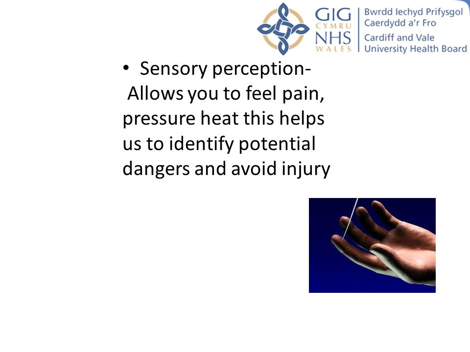 Sensory perception- Allows you to feel pain, pressure heat this helps us to identify potential dangers and avoid injury.