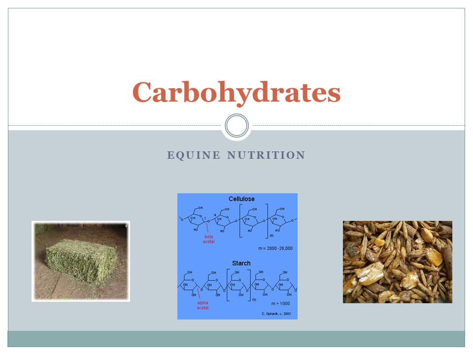 Carbohydrates Equine Nutrition