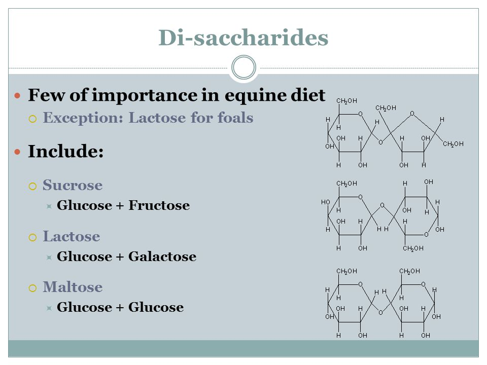 Di-saccharides Few of importance in equine diet Include: