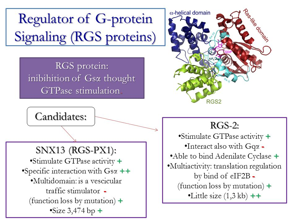 Regulator of G-protein Signaling (RGS proteins)