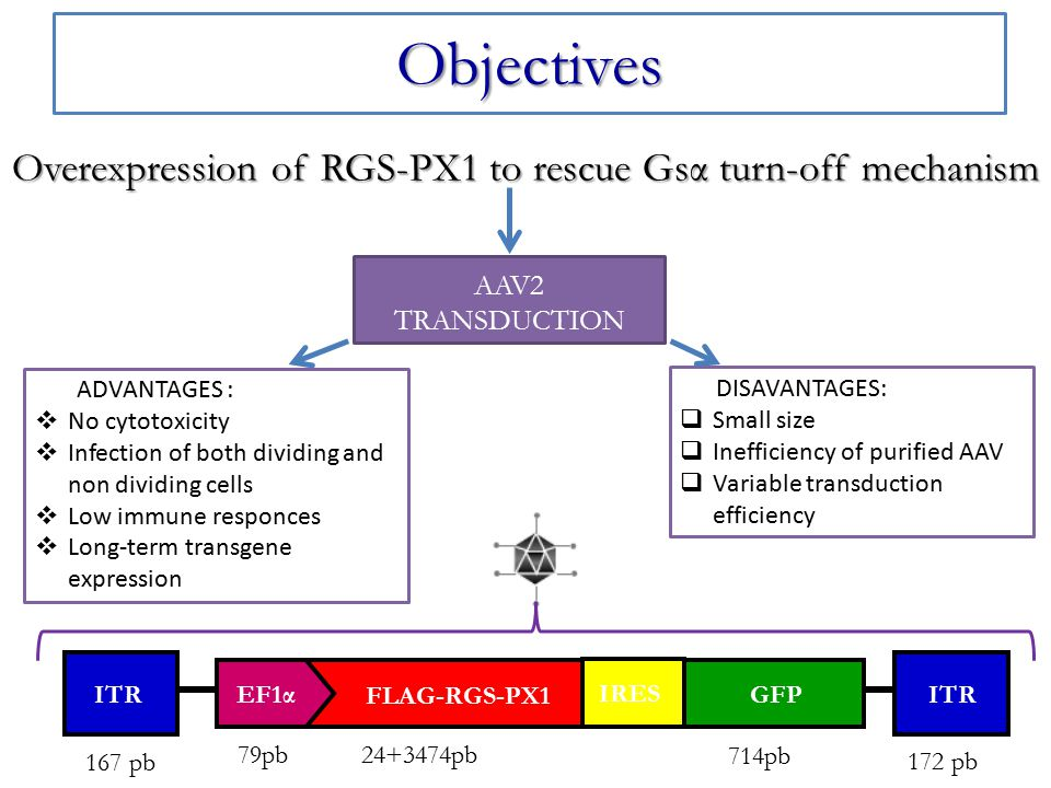 Overexpression of RGS-PX1 to rescue Gsα turn-off mechanism