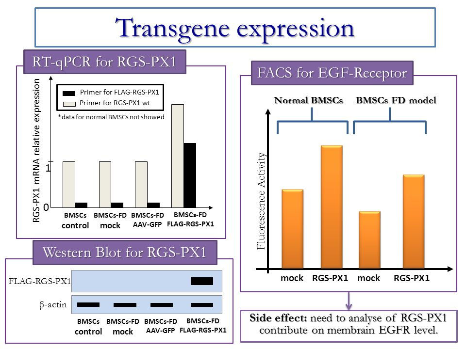 Transgene expression RT-qPCR for RGS-PX1 FACS for EGF-Receptor