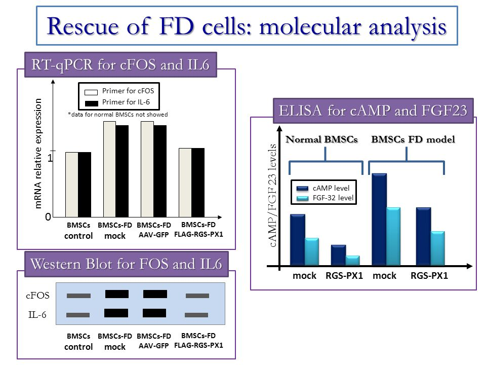 Rescue of FD cells: molecular analysis