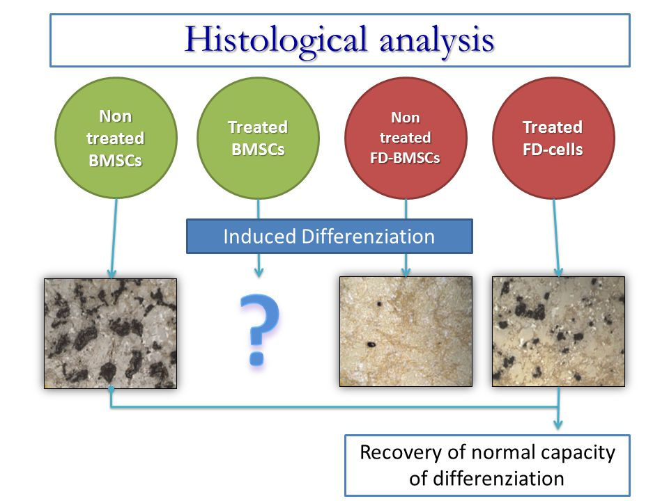 Histological analysis Induced Differenziation
