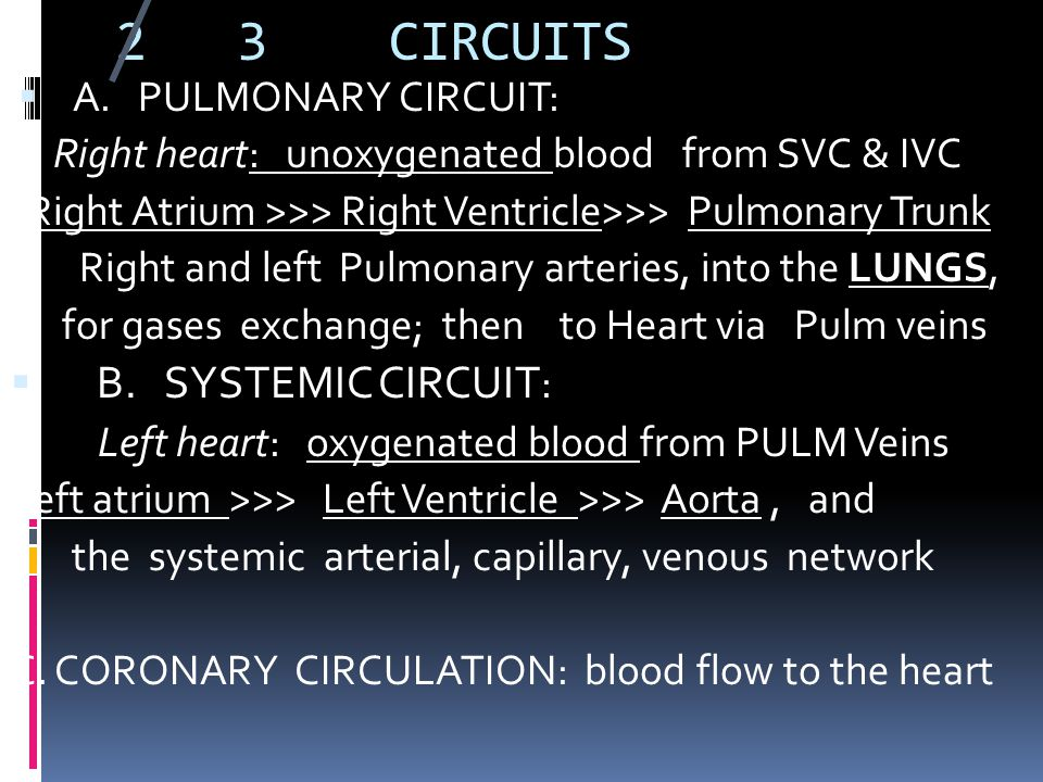 2 3 CIRCUITS B. SYSTEMIC CIRCUIT: A. PULMONARY CIRCUIT: