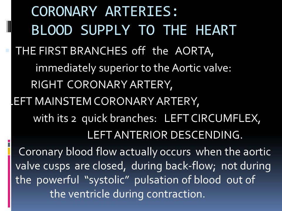 CORONARY ARTERIES: BLOOD SUPPLY TO THE HEART