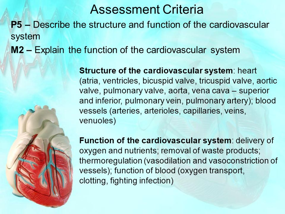 Assessment Criteria P5 – Describe the structure and function of the cardiovascular system M2 – Explain the function of the cardiovascular system