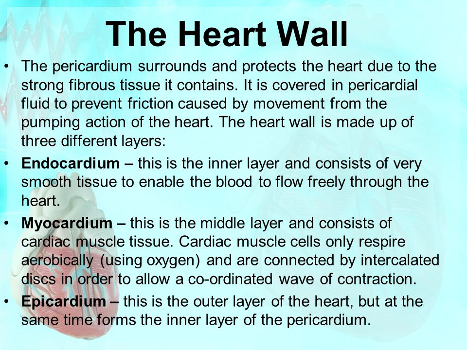 The Heart Wall