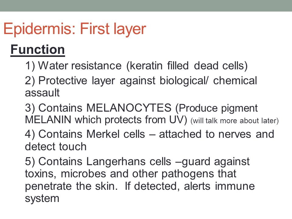Epidermis: First layer