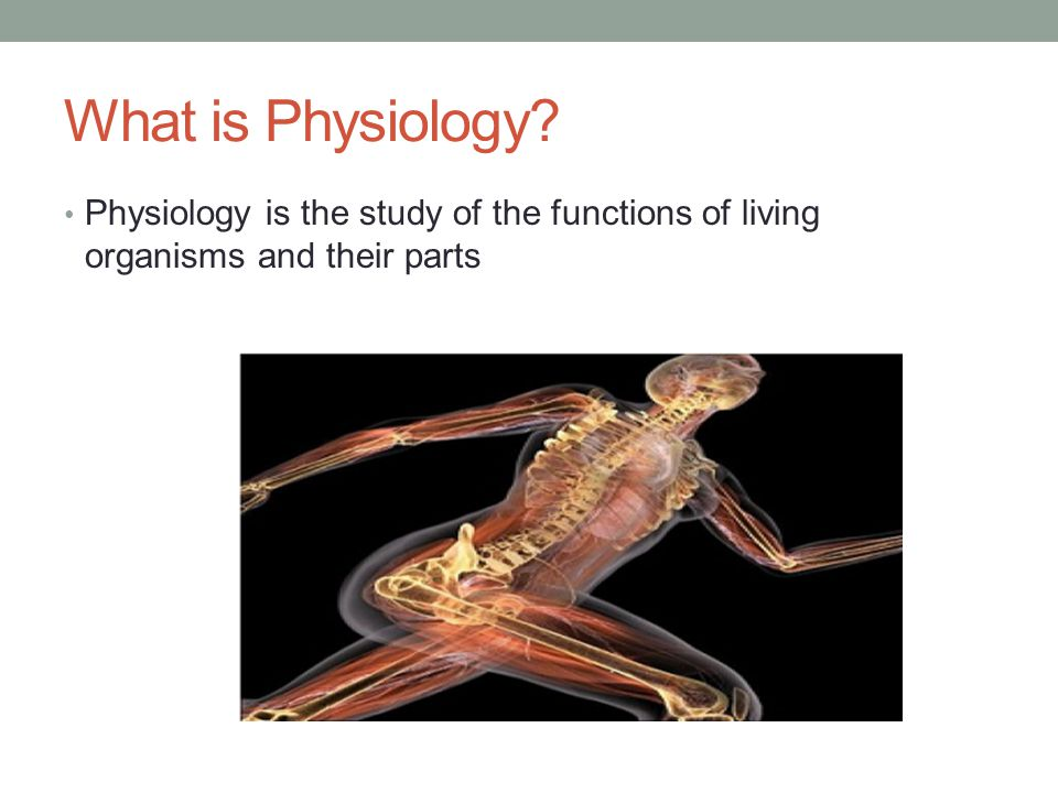 physiology intro: the integumentary system unit 8 – powerpoint #1, Human Body