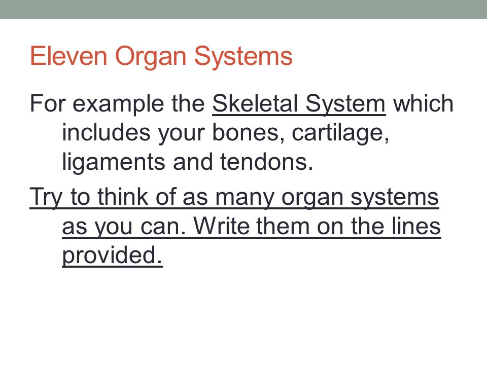 Eleven Organ Systems