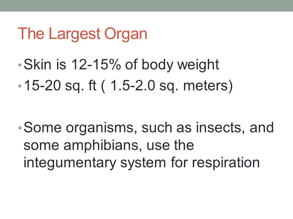 The Largest Organ Skin is 12-15% of body weight