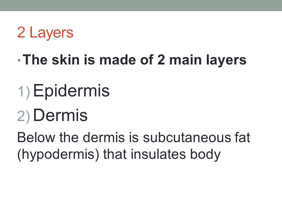 Epidermis Dermis 2 Layers The skin is made of 2 main layers