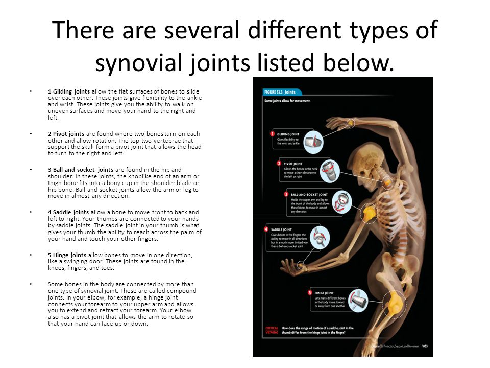 There are several different types of synovial joints listed below.