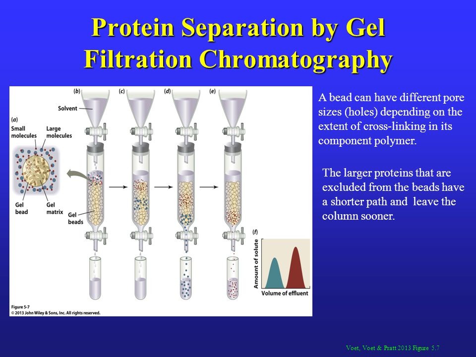 Protein Separation by Gel Filtration Chromatography