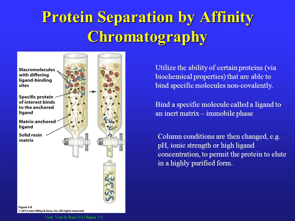 Protein Separation by Affinity Chromatography