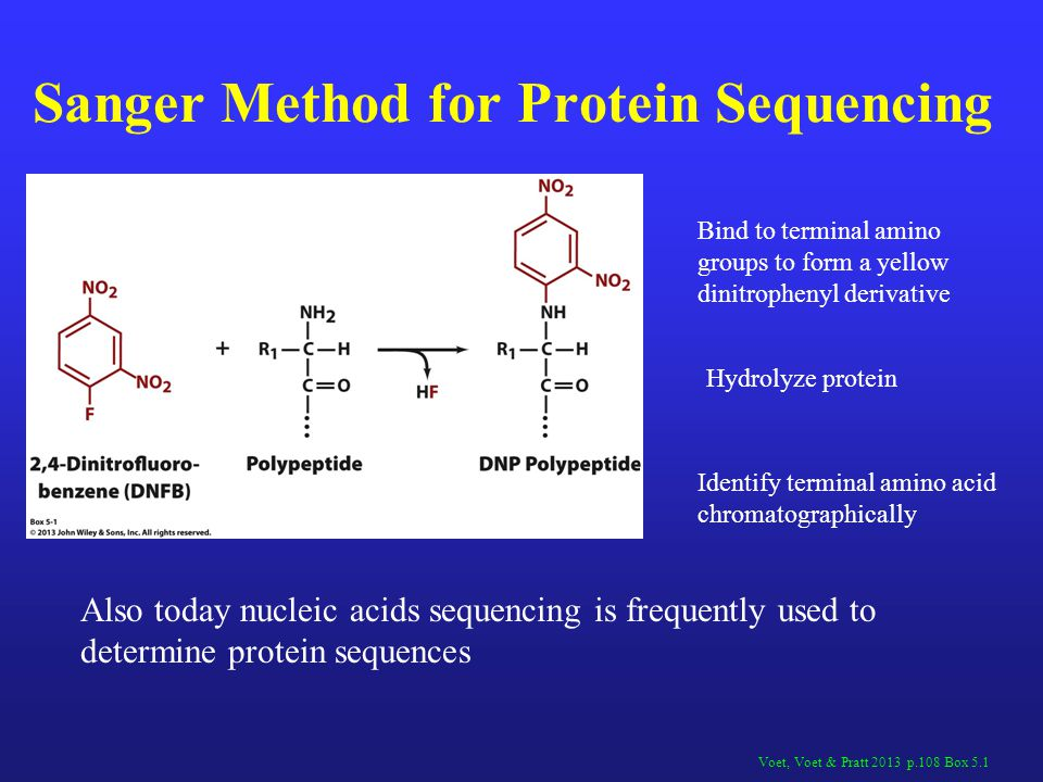 Sanger Method for Protein Sequencing