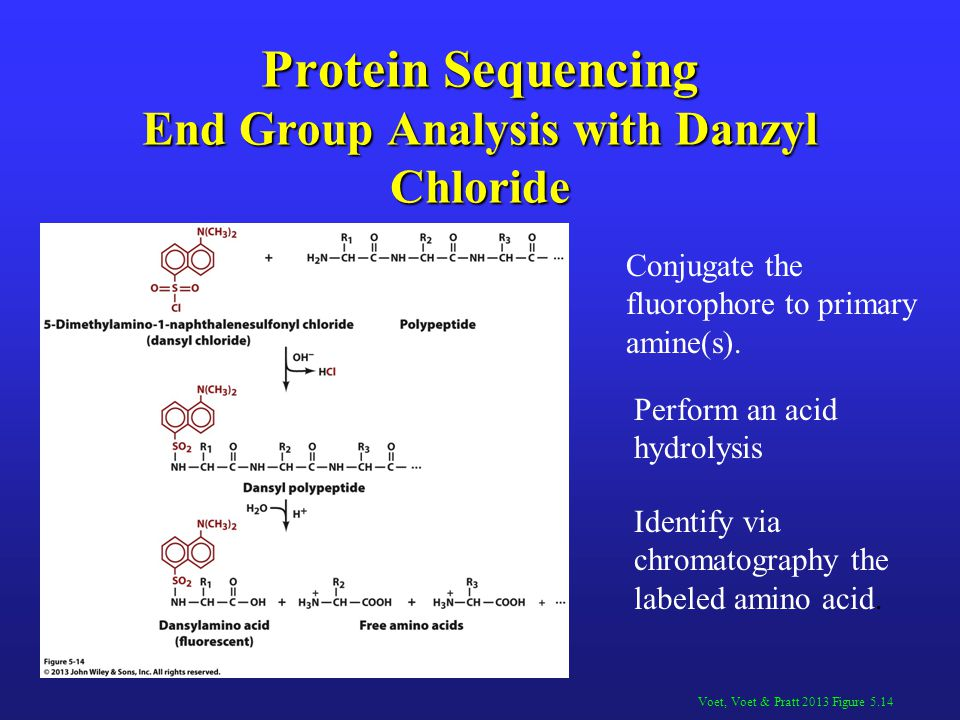 Protein Sequencing End Group Analysis with Danzyl Chloride