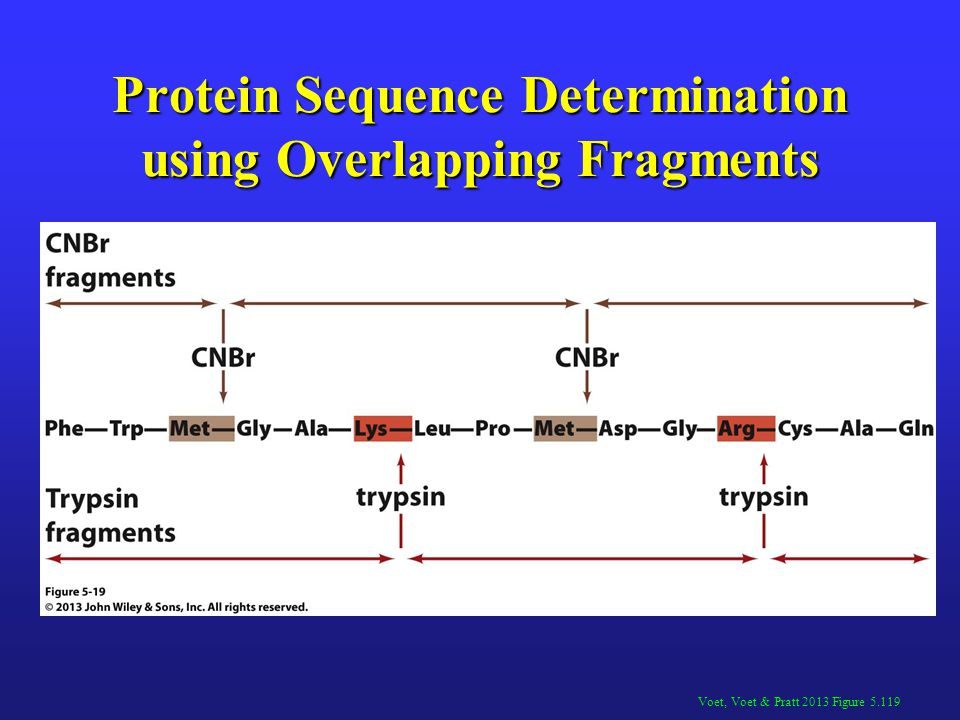 Protein Sequence Determination using Overlapping Fragments