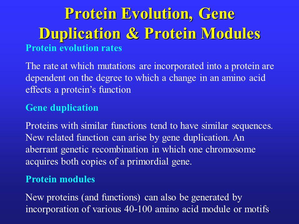 Protein Evolution, Gene Duplication & Protein Modules