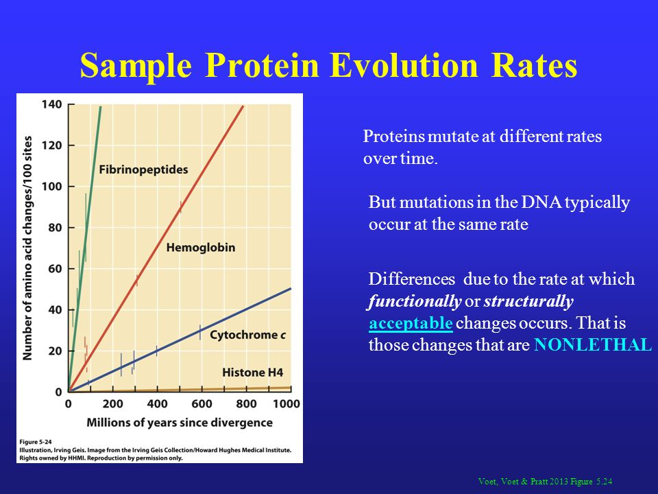 Sample Protein Evolution Rates