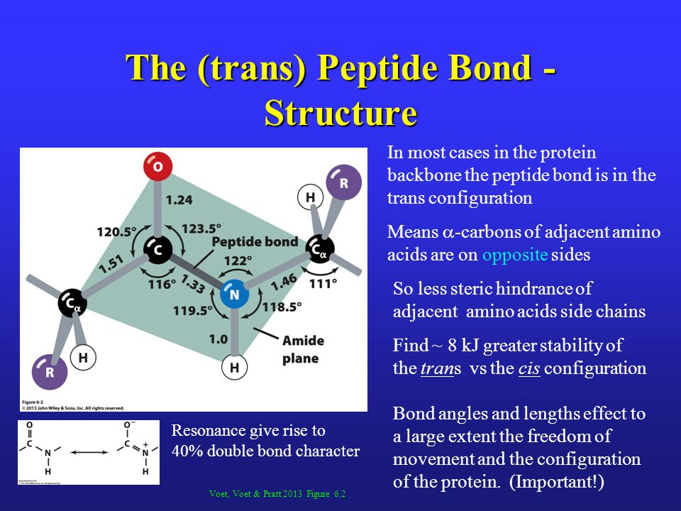 The (trans) Peptide Bond - Structure