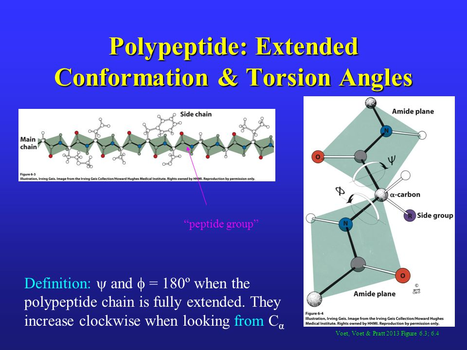 Polypeptide: Extended Conformation & Torsion Angles