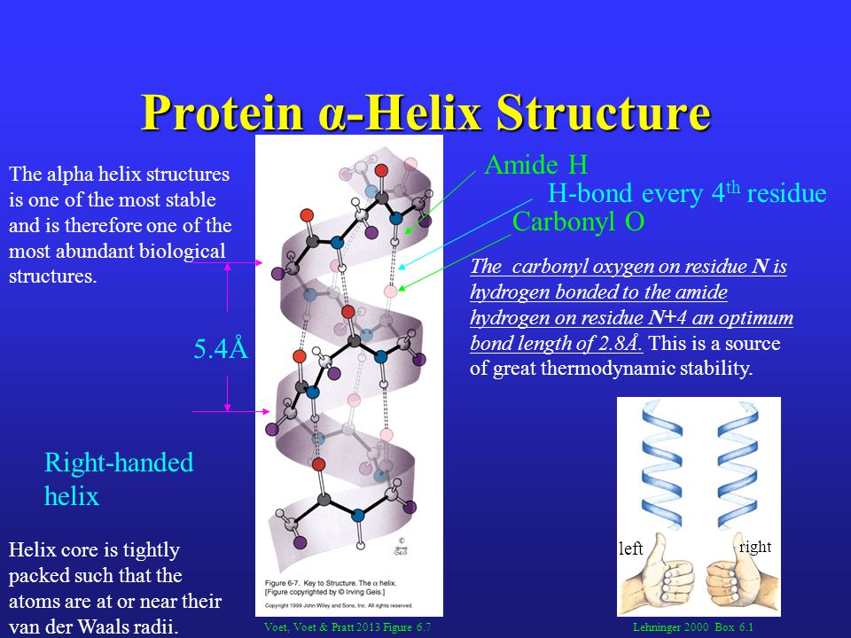 Protein α-Helix Structure