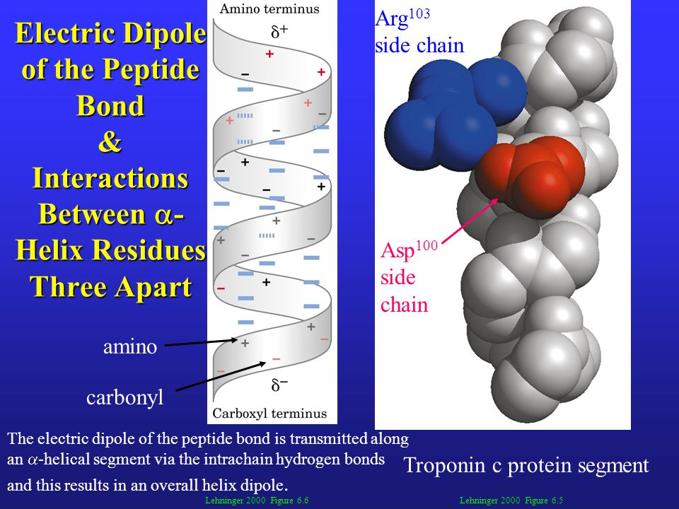 Electric Dipole of the Peptide Bond & Interactions Between -Helix Residues Three Apart