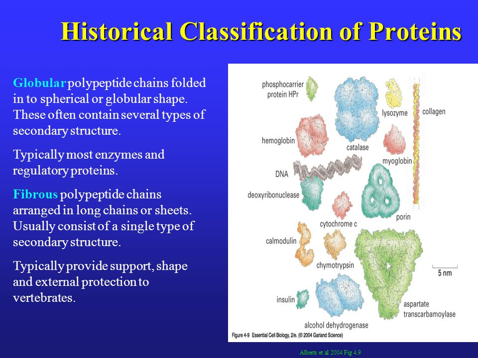 Historical Classification of Proteins