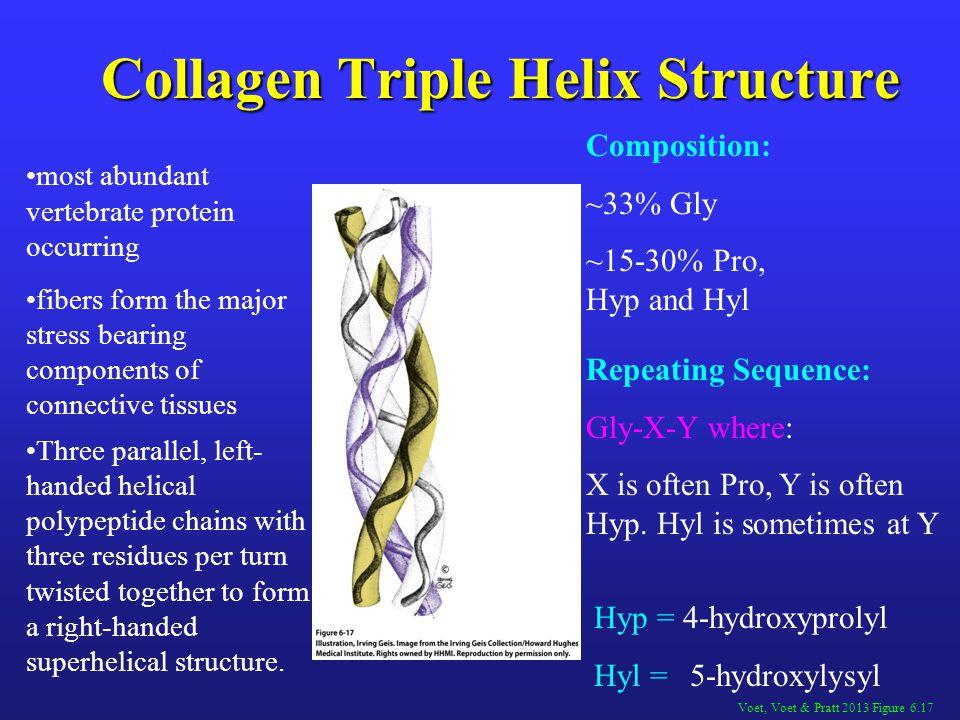 Collagen Triple Helix Structure