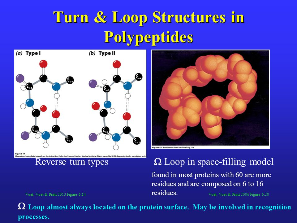 Turn & Loop Structures in Polypeptides