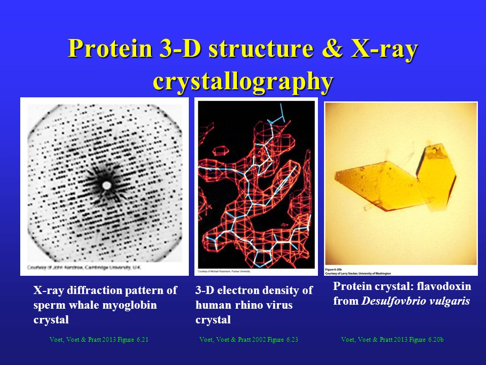 Protein 3-D structure & X-ray crystallography