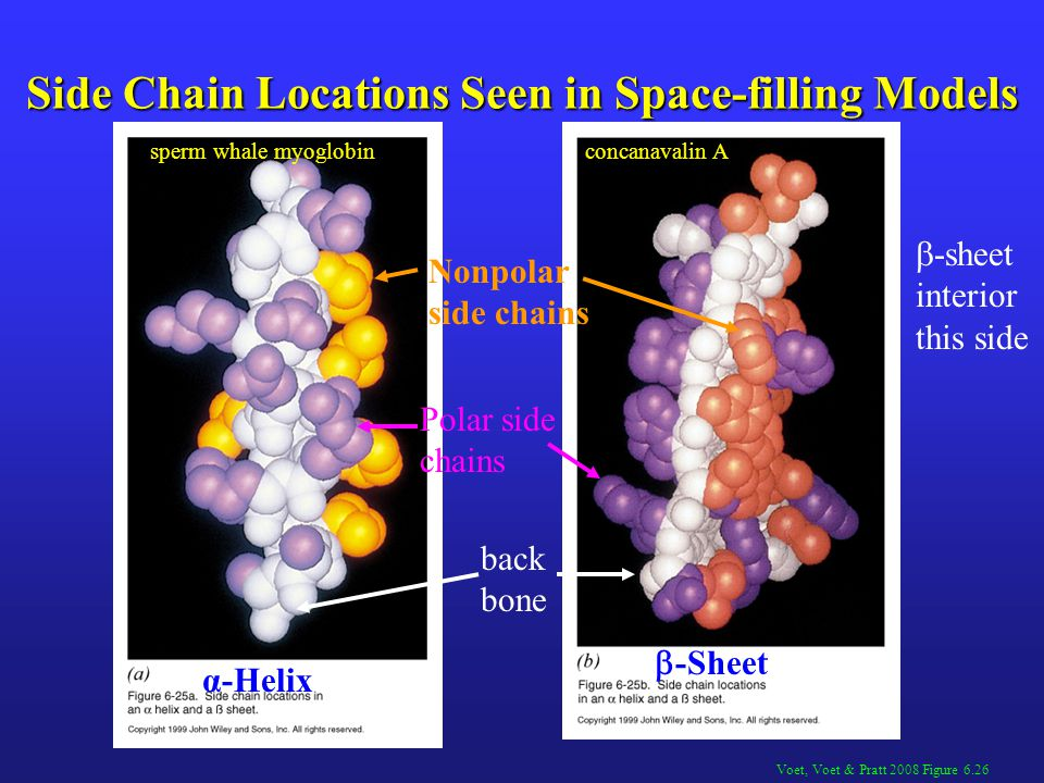 Side Chain Locations Seen in Space-filling Models