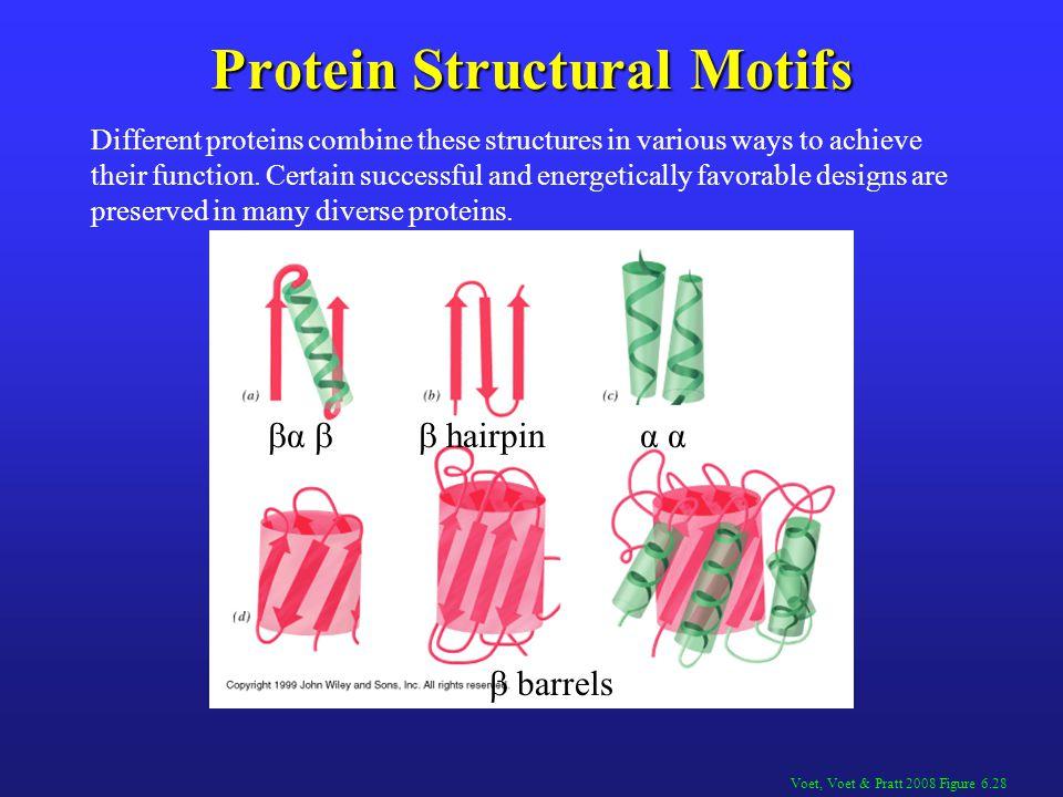 Protein Structural Motifs