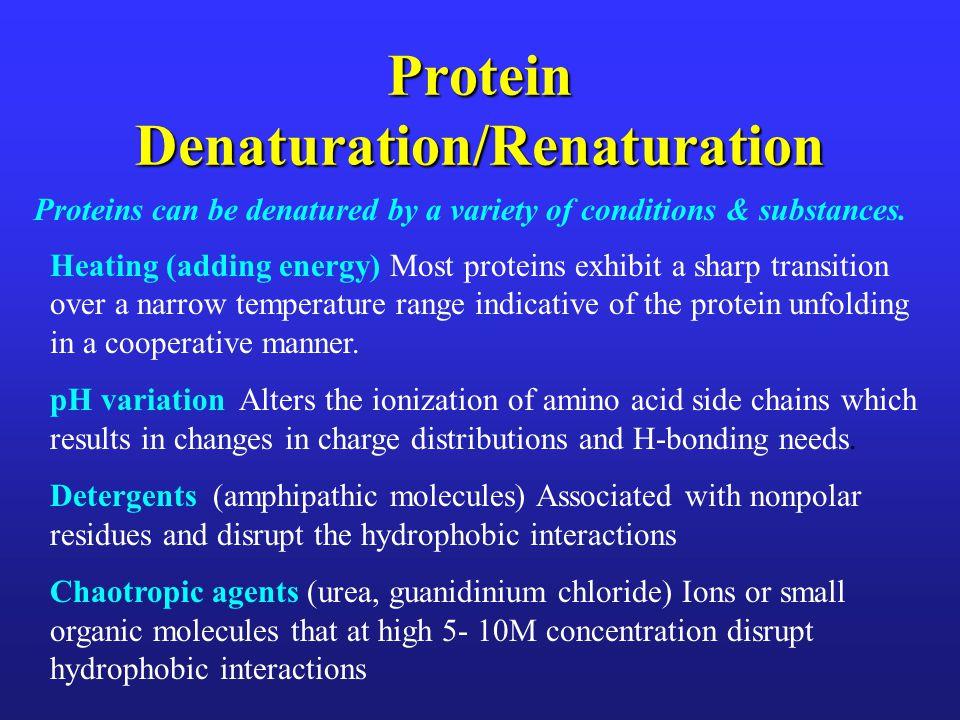 Protein Denaturation/Renaturation