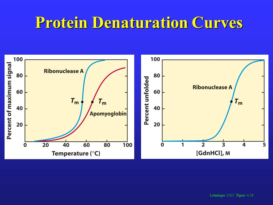 Protein Denaturation Curves