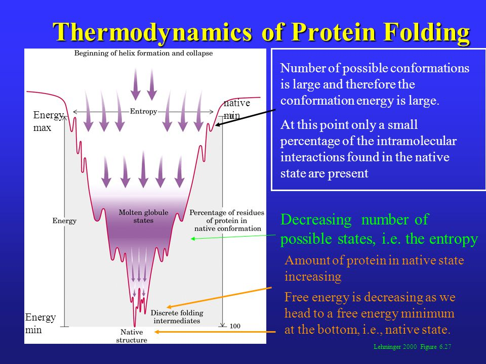 Thermodynamics of Protein Folding