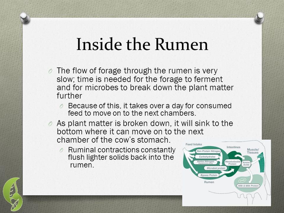 Inside the Rumen
