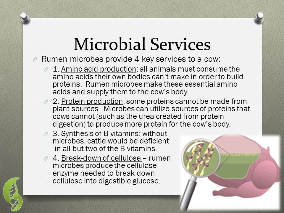 Microbial Services Rumen microbes provide 4 key services to a cow:
