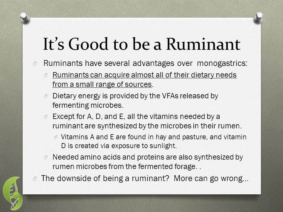 It's Good to be a Ruminant