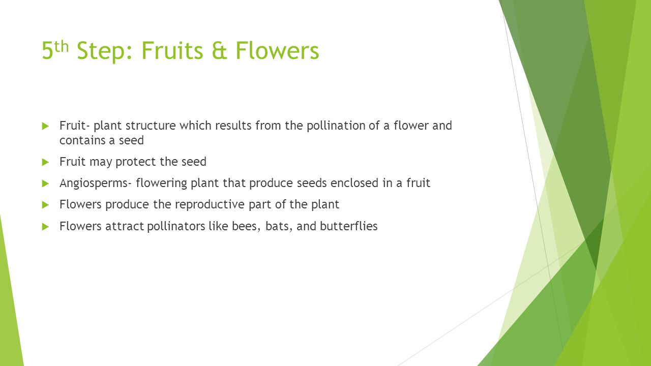 5th Step: Fruits & Flowers