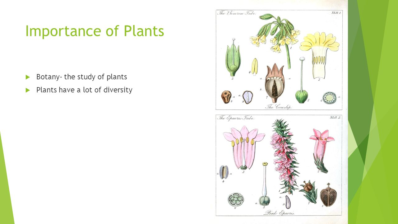 Importance of Plants Botany- the study of plants