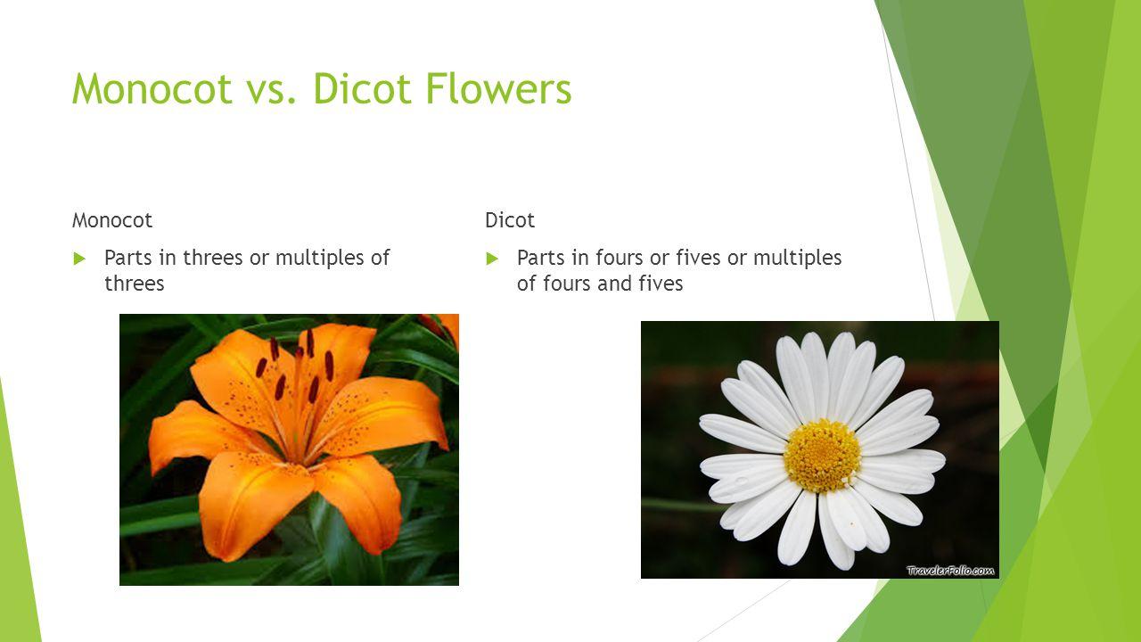Monocot vs. Dicot Flowers