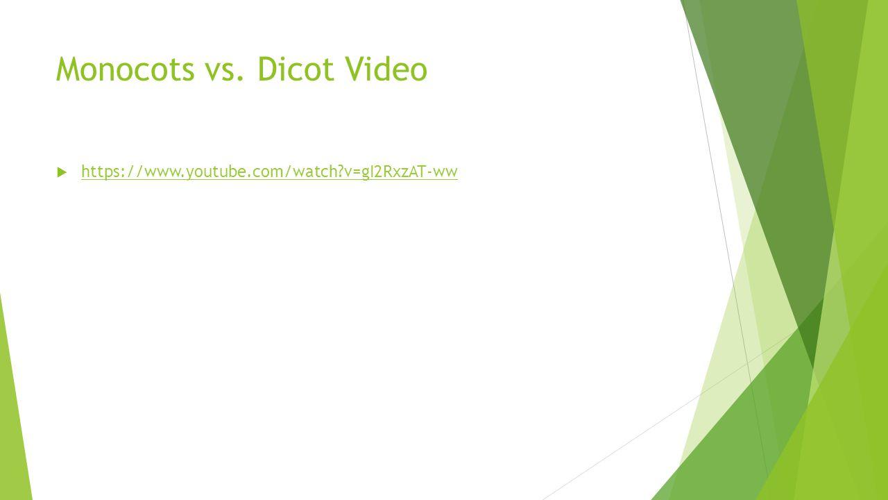 Monocots vs. Dicot Video