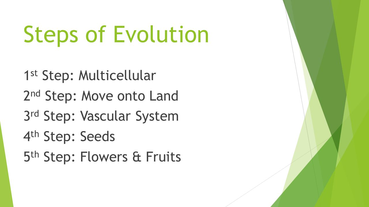Steps of Evolution 1st Step: Multicellular 2nd Step: Move onto Land 3rd Step: Vascular System 4th Step: Seeds 5th Step: Flowers & Fruits