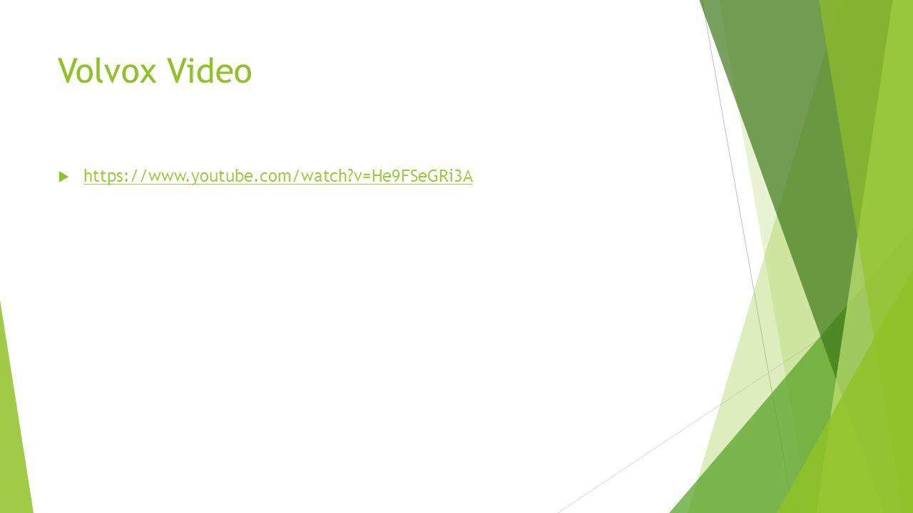 Volvox Video https://www.youtube.com/watch v=He9FSeGRi3A