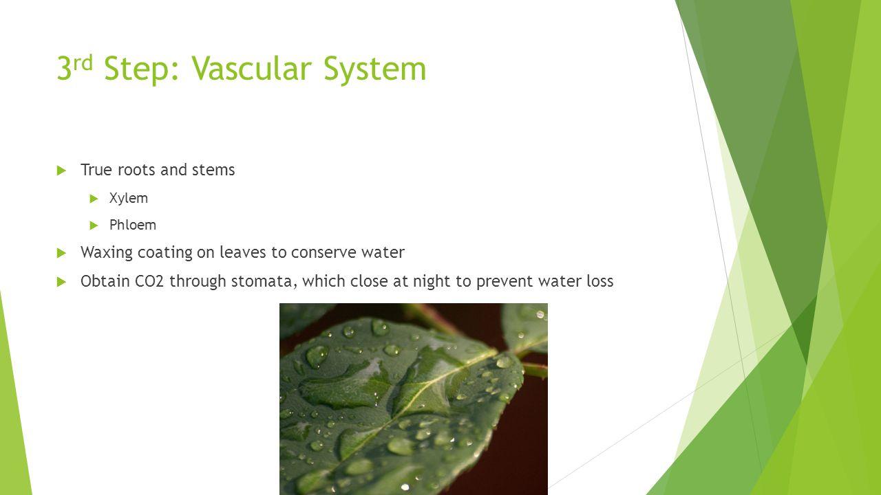 3rd Step: Vascular System