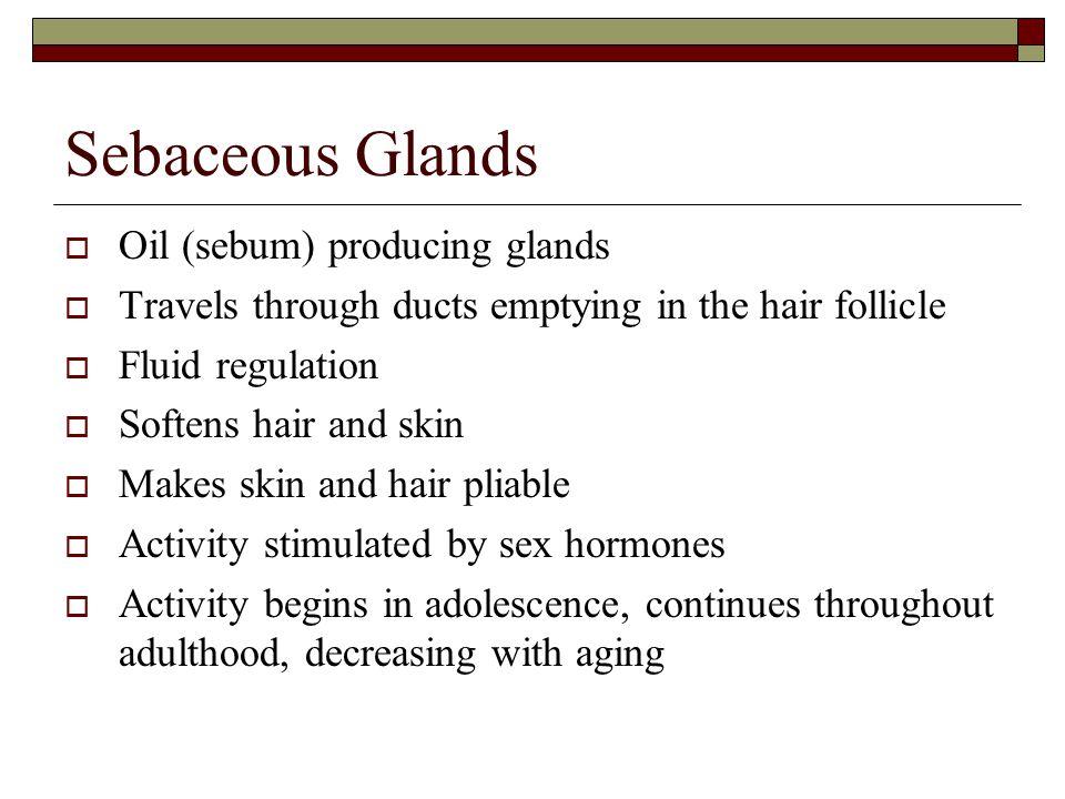 Sebaceous Glands Oil (sebum) producing glands